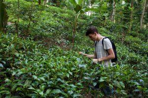 Maciej Stafiej autor bloga Kursnaherbate.pl wśród krzewów herbacianych na Sri Lance