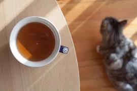 Filiżanka herbaty w towarzystwie kota zmusza do refleksji na temat obojętności wobec ludzi.