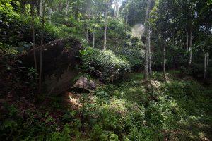 Zacienione, górskie pola uprawy herbaty na Sri Lance.