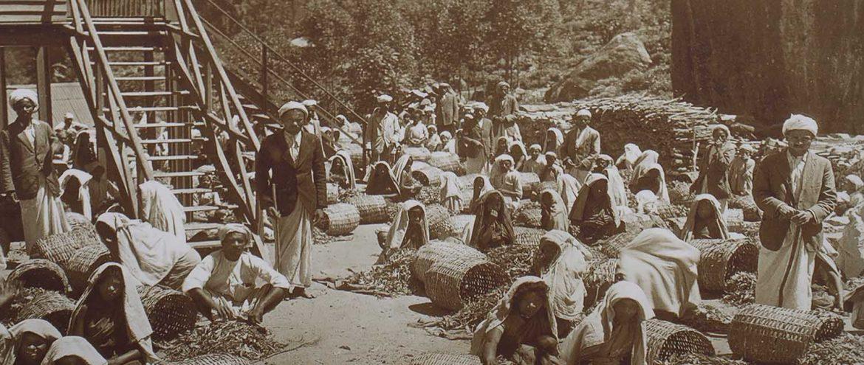 historyczne zdjęcie przedstawiające pracowników plantacji herbaty na Sri Lance