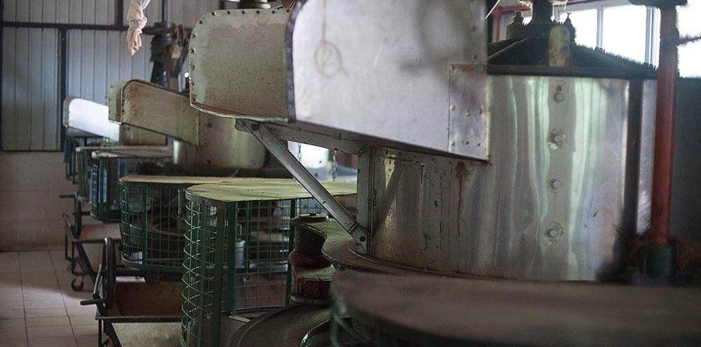 Maszyny służące do rolowania liści herbaty