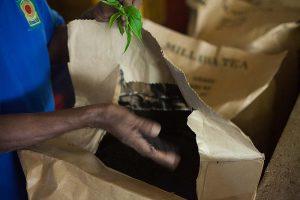 Herbata pakowana do dużych papierowych worków pokrytych folią od wewnętrznej strony