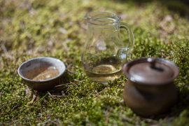 naczynia do parzenia i picia herbaty wraz z herbatą białą na mchu w lesie