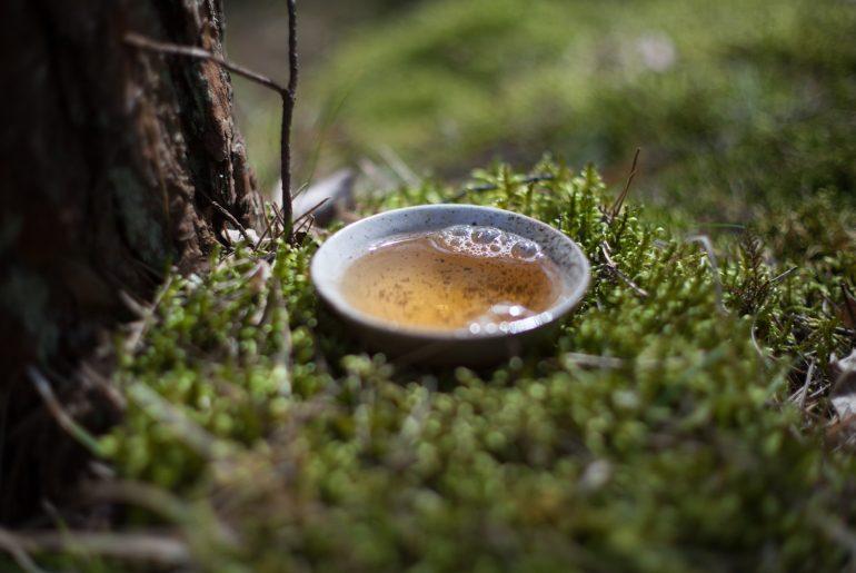 czarka z herbatą białą na mchu w lesie
