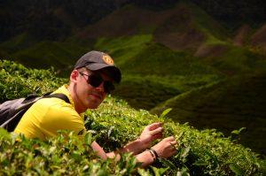 krzysztof groth na plantacji herbaty