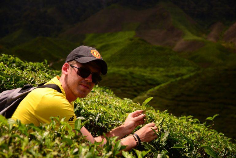 Krzysztof Groth trzymający liście herbaty