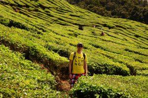 Krzysztof Groth na plantacji herbaty w Malezji pomiędzy krzewami Camelii Sinensis