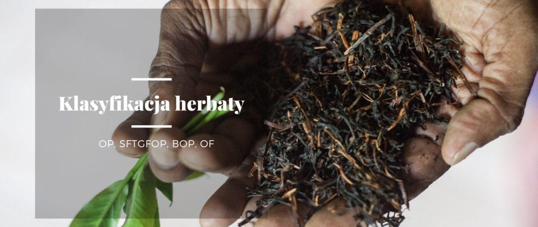 susz herbaciany na dłoniach, przed przesiewem pozwalającym klasyfikować herbatę